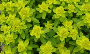 """10 растений вашего сада, которые слизням """"не по зубам"""""""