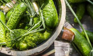 Mazsālītu gurķu recepte bez etiķa