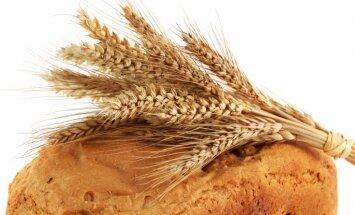 Prognozē trīskāršu Krievijas graudu importa pieaugumu