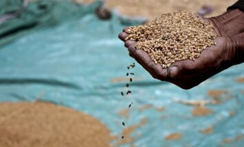 Dūklavs: Naudas atbalsta graudkopjiem nebūs; meklēs iespējas palīdzēt citādi