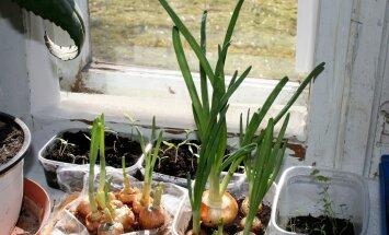 Uztaisīji būrīti, sakopi pagalmu? Parādi 'Delfi Aculieciniekam', kā sagaidi pavasari!