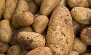 Krievijā vairs nedrīkstēs ievest ukraiņu kartupeļus