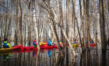 """ФОТО: """"Нереальное"""" катание на лодках среди деревьев прямо в Латвии — на заливных лугах в Двиете"""