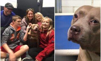 Neticams stāsts: suns, kas patversmē raudāja un saviļņoja miljonus, dienas laikā atrod jaunu saimnieku