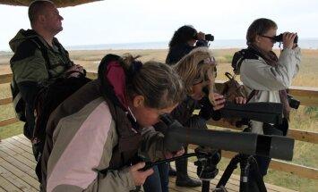 Migrējošo zosu vērošana un ekskursijas Ķemeru nacionālajā parkā