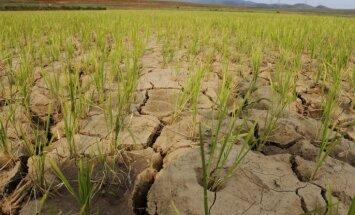 Arī Rugāju novads prasa izsludināt ārkārtēju situāciju ilgstoša sausuma dēļ