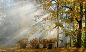 Синоптики: в Латвии продолжается аномально теплая осень, впереди температурные рекорды