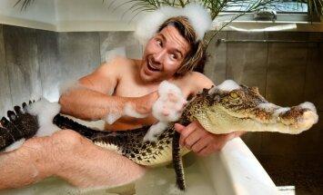 Drosmīgs zoologs vannā iet kopā ar pitonu un krokodilu