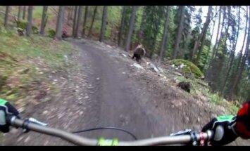 Video: Lācis jož pakaļ kalnu riteņbraucējiem