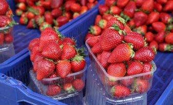 Latvijā audzētas zemenes Centrāltirgū maksā 10-13 eiro kilogramā
