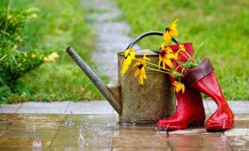 Lietus radītās sekas: kā no jauna savest kārtībā dārzu
