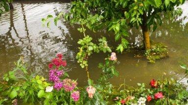 Vai dārzu var apdrošināt pret lietu, krusu, vēja brāzmām un kaitēkļiem