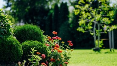 Dārza kursi jūnijā: noderīgas lekcijas un profesionāli kursi