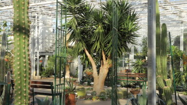 Apmeklētājiem slēgts Nacionālais botāniskais dārzs