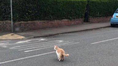 Обидевшийся кот сбежал из дома и стал звездой в английской деревне