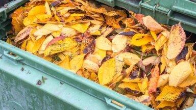 Rīdzinieki bez maksas varēs nodot savāktās koku un krūmu lapas