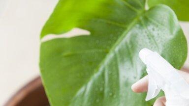 Вашим комнатным растениям не нужна пыль: один из способов очистить растения, который вам тоже понравится