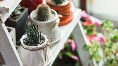 Кактусы, орхидеи или фикусы? Что комнатные растения могут рассказать о своих хозяевах
