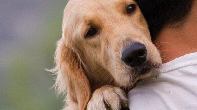 Россия может потерять право на ввоз домашних животных в ЕС