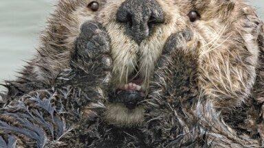 ФОТО. Самые смешные снимки конкурса комедийных фотографий природы