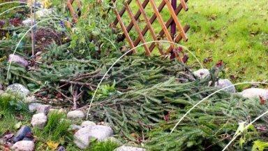 Biežākās kļūdas dārza ieziemošanā un ieteikumi, kā no tām izvairīties