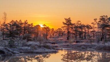 Магические фото: прохладное весеннее утро на Большом Кемерском болоте