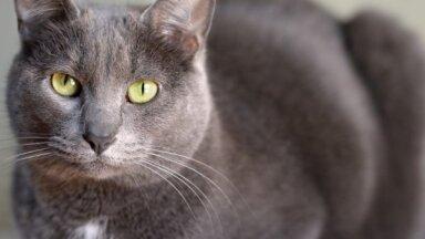 10 пород кошек, о которых вы, возможно, даже не слышали