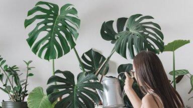 Easy Pot приглашает поучаствовать в бесплатном обмене домашними растениями