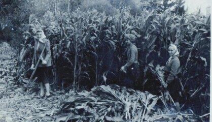 1955. gads: PSRS audzē kukurūzu, ASV atver pirmo Disnejlendu