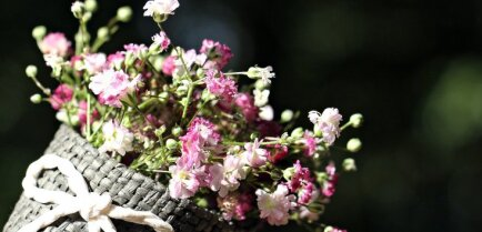 Не дарите их незнакомцам. Топ-9 цветов, доставляющих страдания аллергикам
