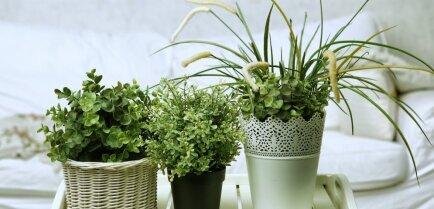 Комнатные растения и как правильно размещать их в доме? Часть 1. Гостиная