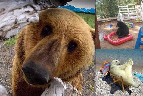 16 фото, которые доказывают, что медведи — это невероятно жуткие чудовища!