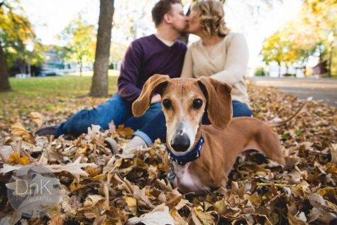 Smieklīga fotobumba: suns izbojā romantisku foto sesiju