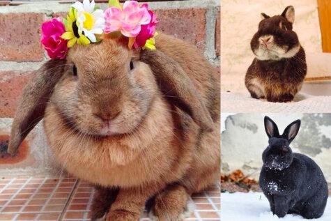 26 живых доказательств того, что кролики — не только ценный мех, но и 3-4 кг чистого счастья