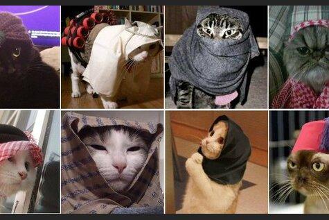 Котиками по ИГИЛу: Жители Брюсселя путают террористов фоточками котов в