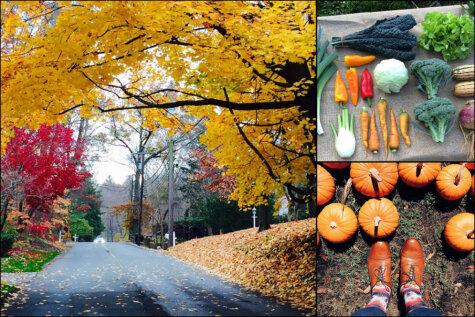 16 осенних фото, радующих каждого, чье любимое время года вот-вот наступит