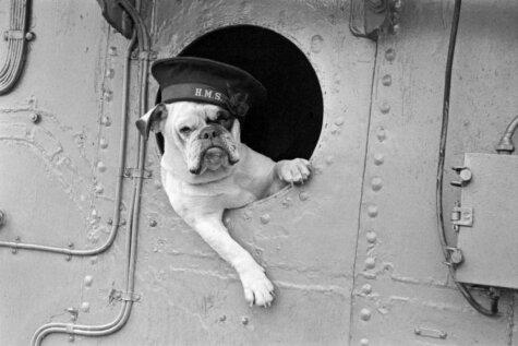 От коров-зебр до розовых самолетов. 10 странных фото Второй мировой войны