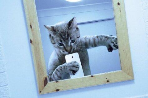 Вышел первый в мире календарь с кошачьими селфи