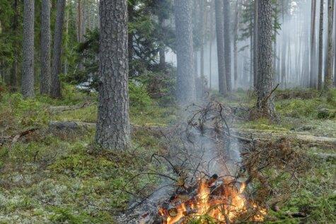 Sargāsim mežu no ugunsgrēka