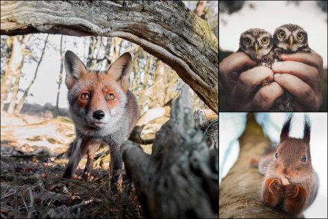 Выстрел в упор из… фоторужья. Потрясающие портреты лис, белок и прочих медведей