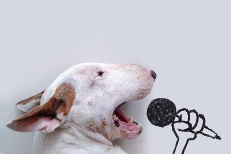 Ko darīt, ja sieva pamet tukšā dzīvoklī, atstājot tikai suni?
