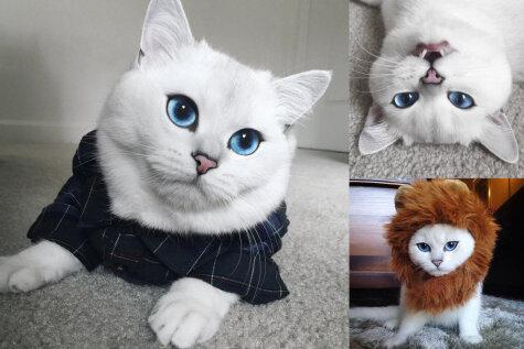 Знакомься, это — Коби, кот с самыми красивыми в мире голубыми глазами!