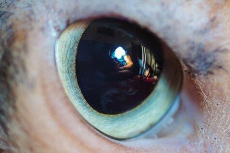 Unikāls hobijs: fotogrāfs iemūžina kaķu acis tuvplānā