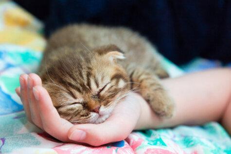 Изучаем язык животных - как понимать кошек?