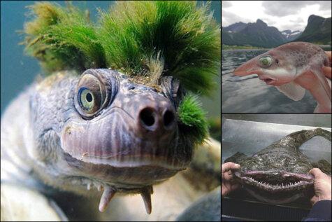 Страшно. Красивые. Рыбак из Мурманска выкладывает ФОТО жутких морских тварей
