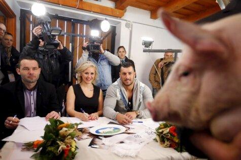 Īpašā konkursā Ungārijā izraudzīta valstī pati skaistākā cūka