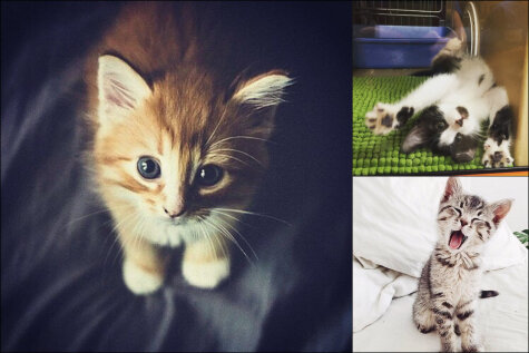 50 фото котят, потому что — почему бы и нет?