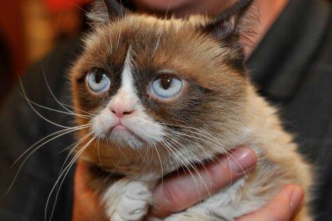 Пять самых знаменитых котов современности