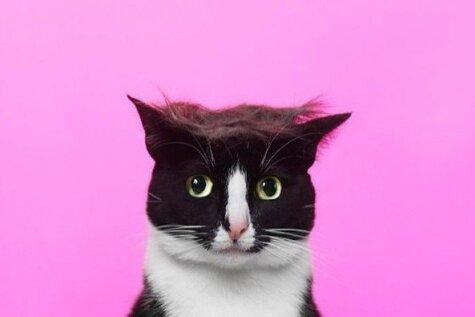 Jauns sociālo tīklu joks – dzīvnieki ar Donalda Trampa frizūru