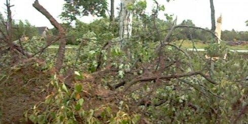 Kapi Sventē pēc vētras